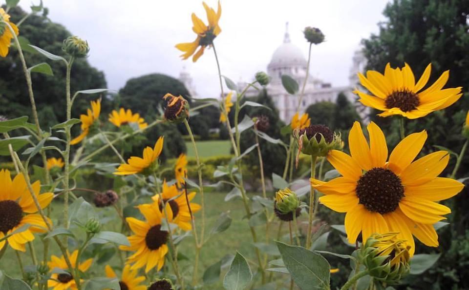 victoria memorial garden